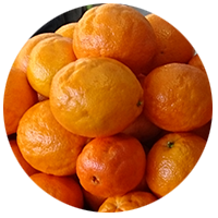Compac-puff-and-crease-citrus.png