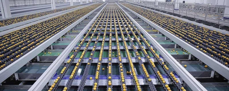 One of the world's most advanced citrus packhouses