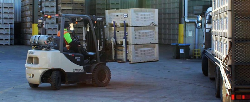Firklift 'Safety Halo' proves to be a saviour for packhouses