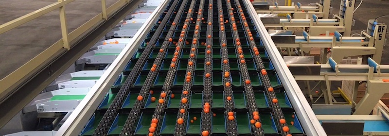 A time for change: Technology in the fresh produce industry