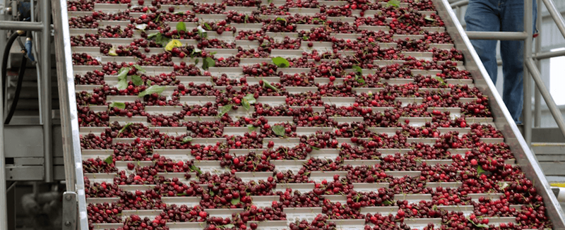 Prima Frutta: Cherry packing solution