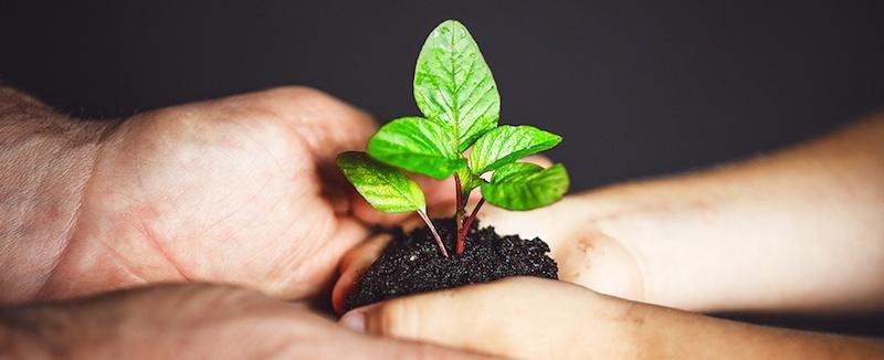 sustainability-blog.jpg