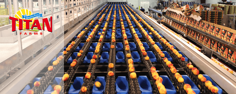 Titan Farms: The recognized benchmark for quality in the peach industry