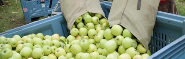 Ceravolo orchards