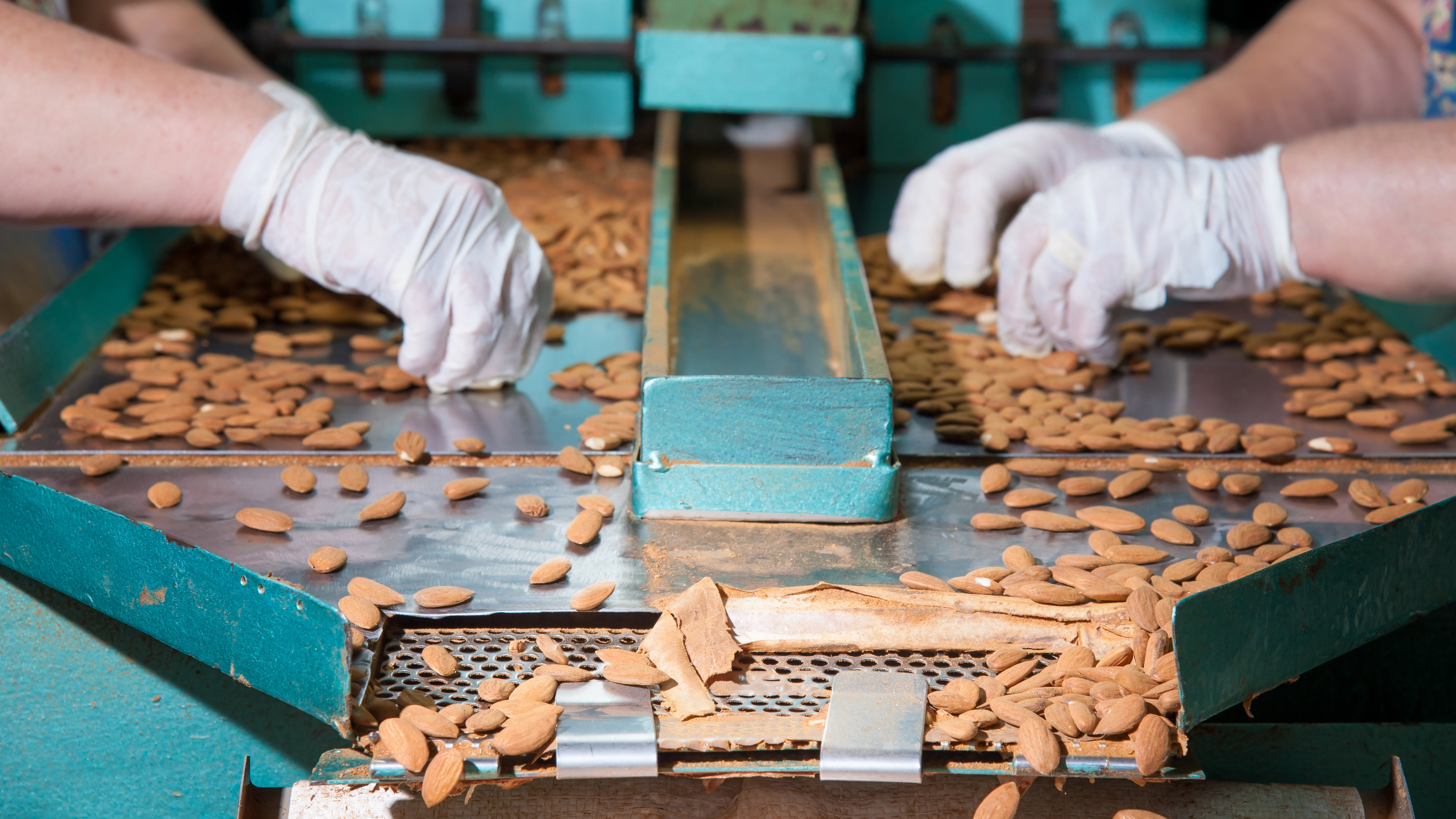 Almond sorting
